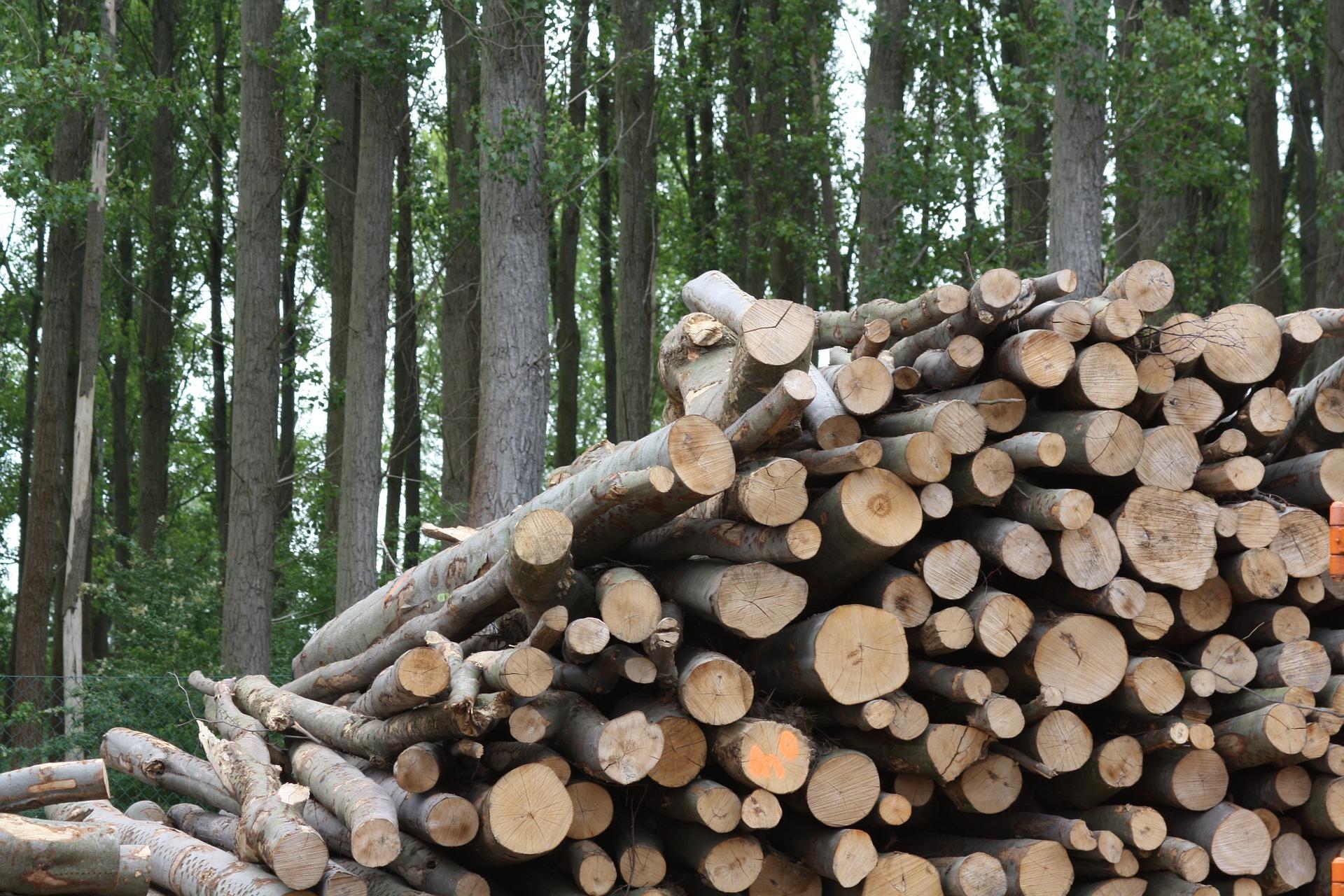 Image de biomasse