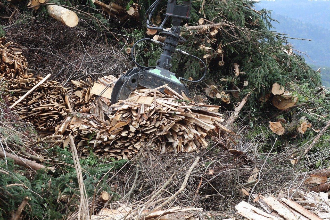 Exploitation forestière bois